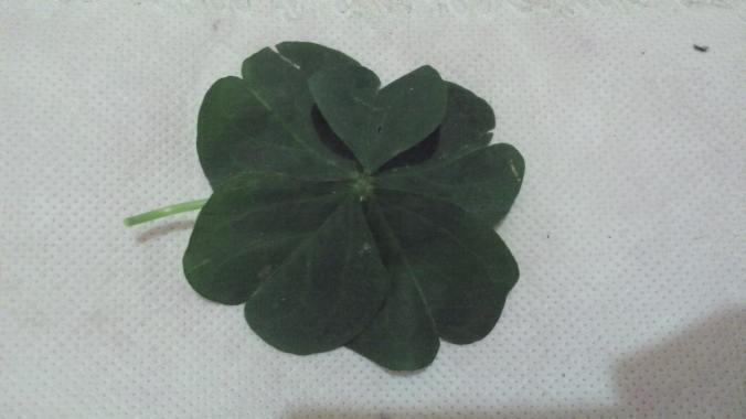 trebol 5 hojas
